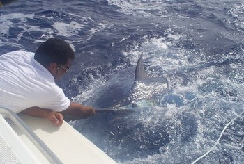 Please Release Me Cavalier & Blue Marlin Sport Fishing Gran Canaria