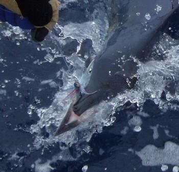 Broken Bill ! Cavalier & Blue Marlin Sport Fishing Gran Canaria