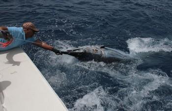 11/08 Blue Marlin Cavalier & Blue Marlin Sport Fishing Gran Canaria