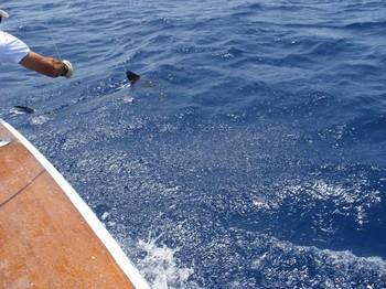 Release Me 1 Cavalier & Blue Marlin Sport Fishing Gran Canaria
