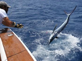 Release Me - 3 Cavalier & Blue Marlin Sport Fishing Gran Canaria