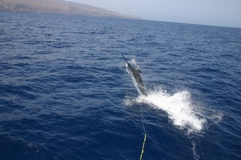 27/08 Blue Marlin Cavalier & Blue Marlin Sport Fishing Gran Canaria