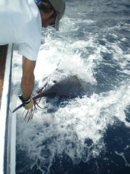 28/08 Blue Marlin Cavalier & Blue Marlin Sport Fishing Gran Canaria