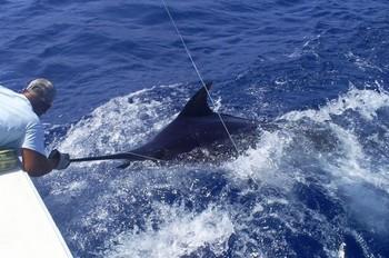 03/09  Blue Marlin Cavalier & Blue Marlin Sport Fishing Gran Canaria