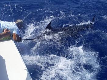 release me 3 Cavalier & Blue Marlin Sport Fishing Gran Canaria