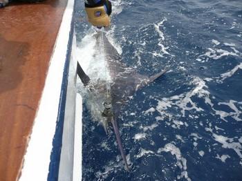 04/09 Blue Marlin Cavalier & Blue Marlin Sport Fishing Gran Canaria