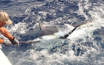 06/09 Blue Marlin Cavalier & Blue Marlin Sport Fishing Gran Canaria