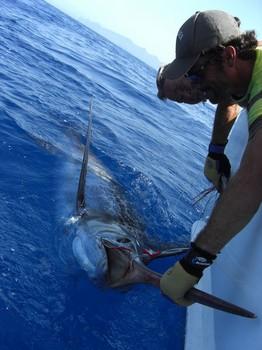 09/09 Blue Marlin Cavalier & Blue Marlin Sport Fishing Gran Canaria