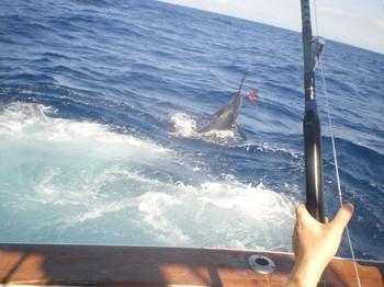 18/09 Blue Marlin Cavalier & Blue Marlin Sport Fishing Gran Canaria