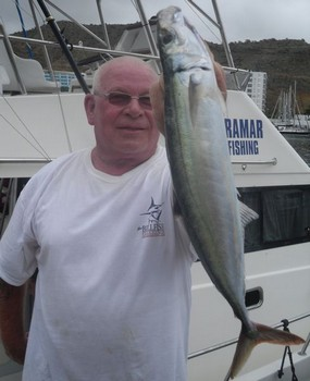 Scad Mackerel Cavalier & Blue Marlin Sport Fishing Gran Canaria