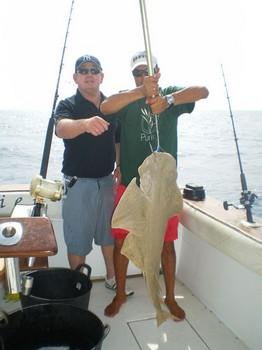 Angel shark Cavalier & Blue Marlin Sport Fishing Gran Canaria