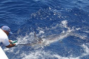 16/06 Blue Marlin Cavalier & Blue Marlin Sport Fishing Gran Canaria
