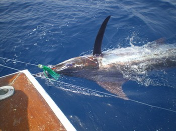 23/06 Blue Marlin Cavalier & Blue Marlin Sport Fishing Gran Canaria