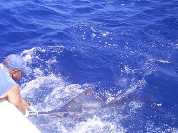 Blue Marlin 110 kg Cavalier & Blue Marlin Sport Fishing Gran Canaria