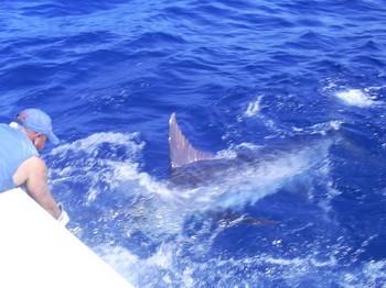 Blue Marlin 225 kg Cavalier & Blue Marlin Sport Fishing Gran Canaria