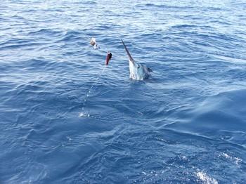 the jump Cavalier & Blue Marlin Sport Fishing Gran Canaria