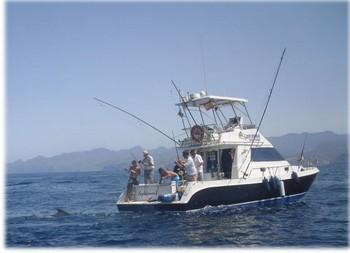 03/08 280 kg Blue Marlin Cavalier & Blue Marlin Sport Fishing Gran Canaria