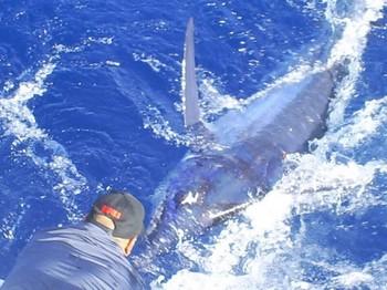 10/09 Blue Marlin Cavalier & Blue Marlin Sport Fishing Gran Canaria