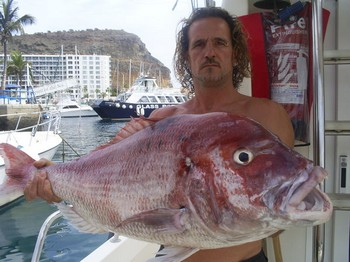 Seabream common Cavalier & Blue Marlin Sport Fishing Gran Canaria