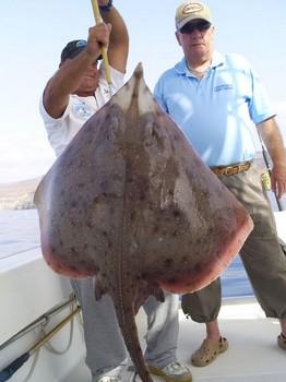 Patín de nariz de botella Pesca Deportiva Cavalier & Blue Marlin Gran Canaria
