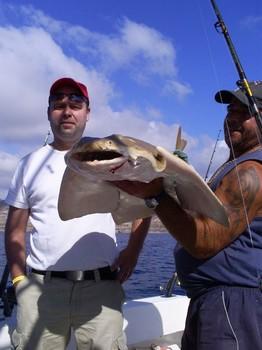 Tiburon angel Pesca Deportiva Cavalier & Blue Marlin Gran Canaria