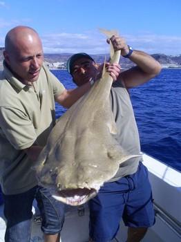 29/12 Tiburón ángel Pesca Deportiva Cavalier & Blue Marlin Gran Canaria