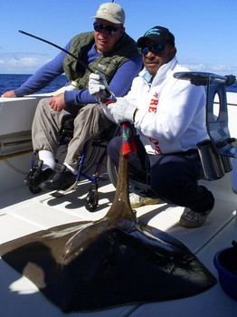 16/02 Common Stingray Cavalier & Blue Marlin Sport Fishing Gran Canaria