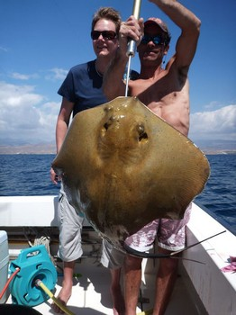 28/02 Common Stingray Cavalier & Blue Marlin Sport Fishing Gran Canaria
