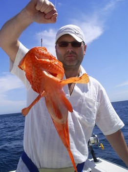 Scorpion or Fire fish Cavalier & Blue Marlin Sport Fishing Gran Canaria