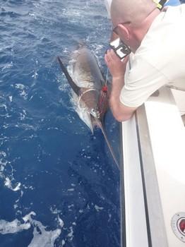17/05 Blue Marlin Cavalier & Blue Marlin Sport Fishing Gran Canaria