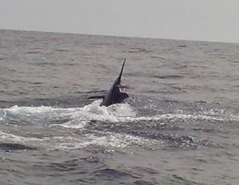 Tag & Release Cavalier & Blue Marlin Sport Fishing Gran Canaria