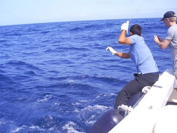 1 minute before release Cavalier & Blue Marlin Sport Fishing Gran Canaria
