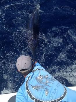28/05 Blue Marlin Cavalier & Blue Marlin Sport Fishing Gran Canaria