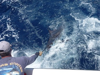 29/05 Relese Me !!!!! Cavalier & Blue Marlin Sport Fishing Gran Canaria
