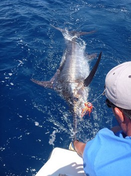 30/05 Blue Marlin Cavalier & Blue Marlin Sport Fishing Gran Canaria