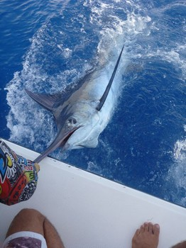 08/06 Blue Marlin Cavalier & Blue Marlin Sport Fishing Gran Canaria