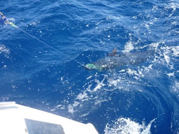 Blue Marlin Cavalier & Blue Marlin Sport Fishing Gran Canaria