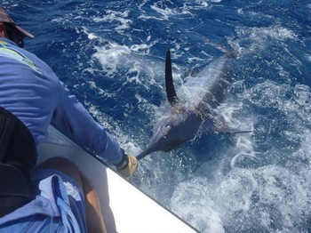 12/06 Blue Marlin Cavalier & Blue Marlin Sport Fishing Gran Canaria