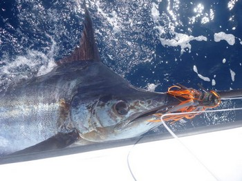 13/06 Blue Marlin Cavalier & Blue Marlin Sport Fishing Gran Canaria