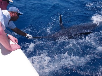 20/06 Blue Marlin Cavalier & Blue Marlin Sport Fishing Gran Canaria