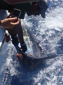 23/06 Release Me Cavalier & Blue Marlin Sport Fishing Gran Canaria