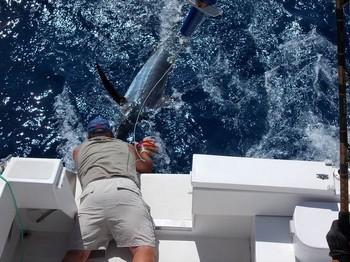 Hookie Hookie Picu Cavalier & Blue Marlin Sport Fishing Gran Canaria