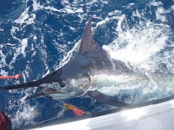 13/07 Blue Marlin Cavalier & Blue Marlin Sport Fishing Gran Canaria