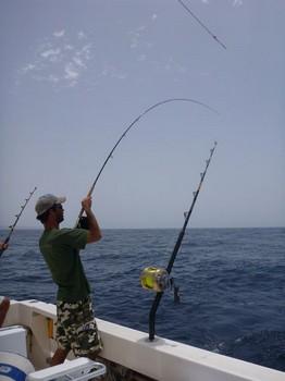 Fly Fishing Cavalier & Blue Marlin Sport Fishing Gran Canaria