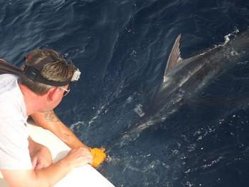 23/07 Blue Marlin Cavalier & Blue Marlin Sport Fishing Gran Canaria