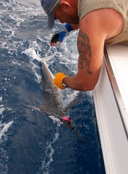 06/08 Spearfish Cavalier & Blue Marlin Sport Fishing Gran Canaria