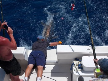 Release Me ! Cavalier & Blue Marlin Sport Fishing Gran Canaria