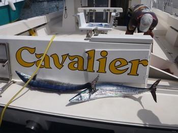 12/08 Wahoo's Cavalier & Blue Marlin Sport Fishing Gran Canaria