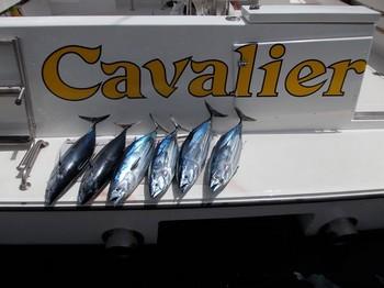 skipjacks Cavalier & Blue Marlin Sport Fishing Gran Canaria