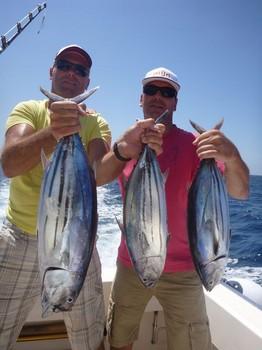 07/09 Atunes listado Pesca Deportiva Cavalier & Blue Marlin Gran Canaria